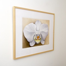 Lara's Orchid limited edition framed from left