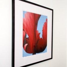 Red June framed limited edition from left